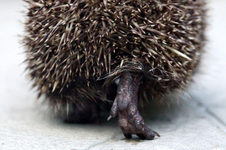 Fotos engracadas de animais a partir de angulos inusitados 4