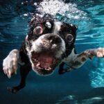 Fotos engracadas de animais a partir de angulos inusitados 50