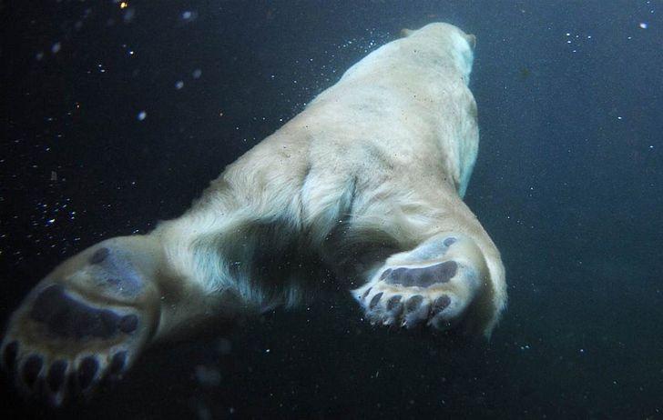 Fotos engracadas de animais a partir de angulos inusitados 6