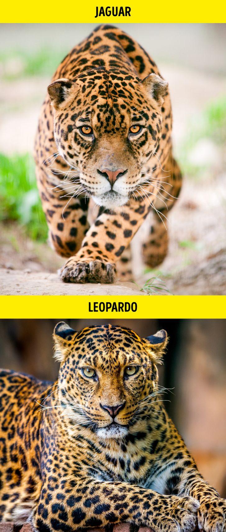 Animais identicos porem de especies diferentes 1