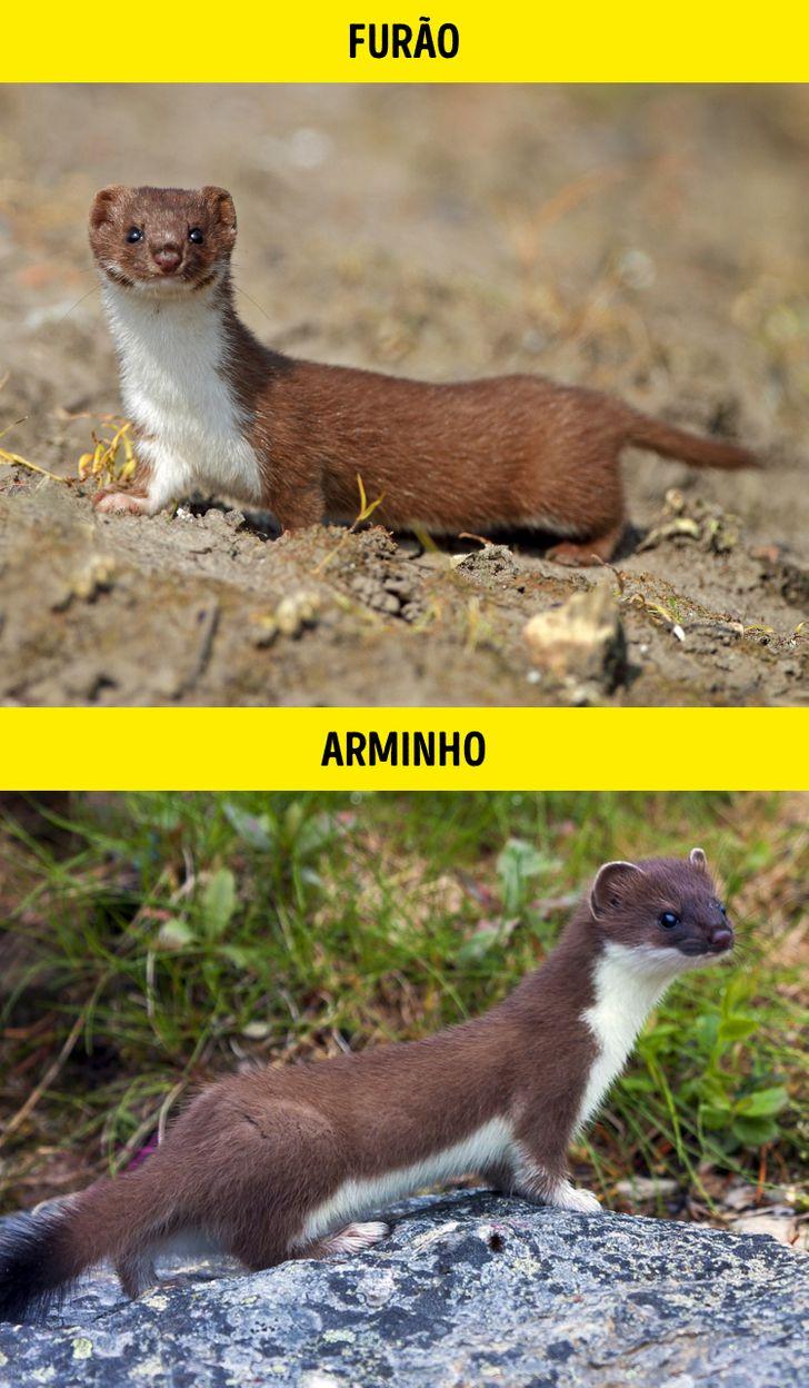 Animais identicos porem de especies diferentes 10