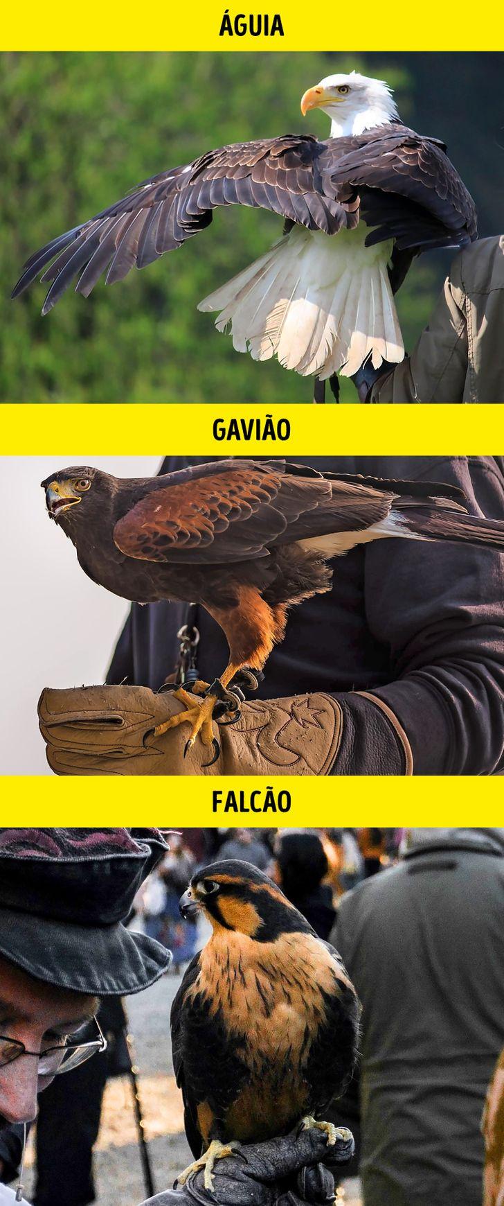 Animais identicos porem de especies diferentes 11