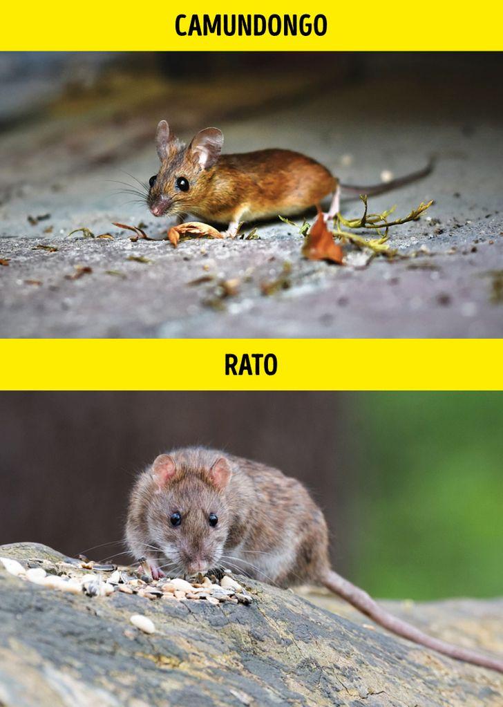 Animais identicos porem de especies diferentes 12