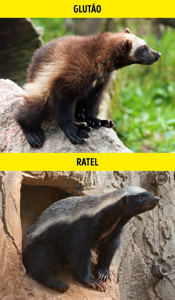 Animais identicos porem de especies diferentes 15