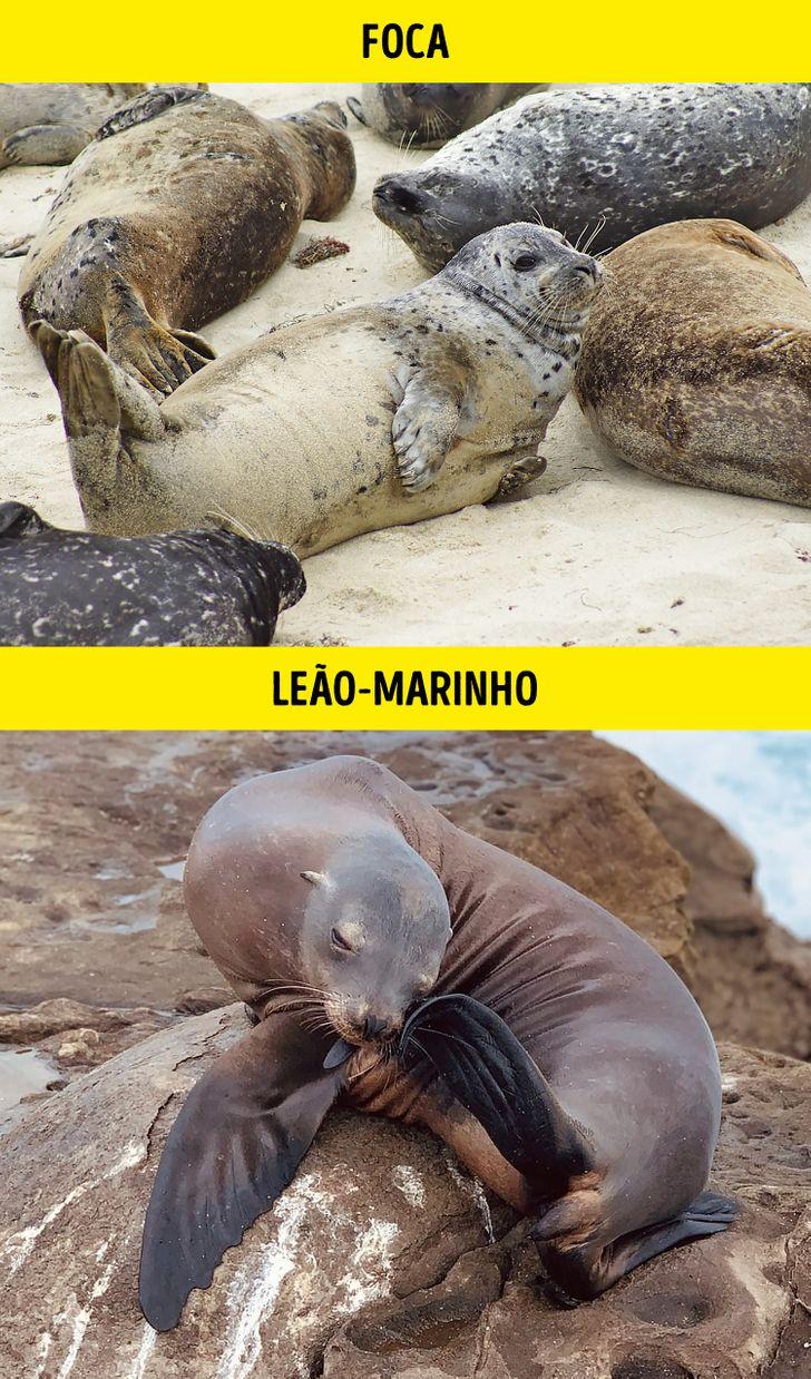 Animais identicos porem de especies diferentes 3