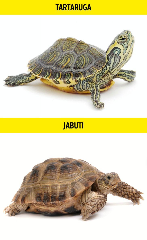 Animais identicos porem de especies diferentes 4