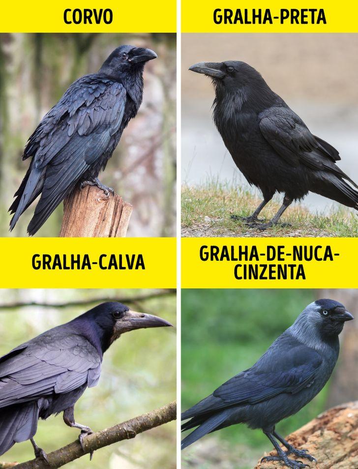 Animais identicos porem de especies diferentes 5