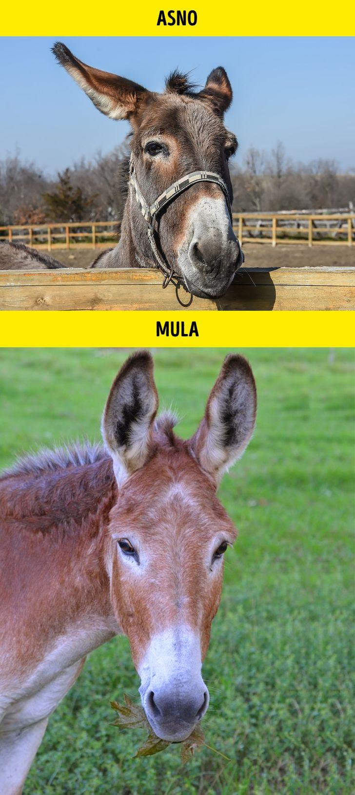 Animais identicos porem de especies diferentes 6