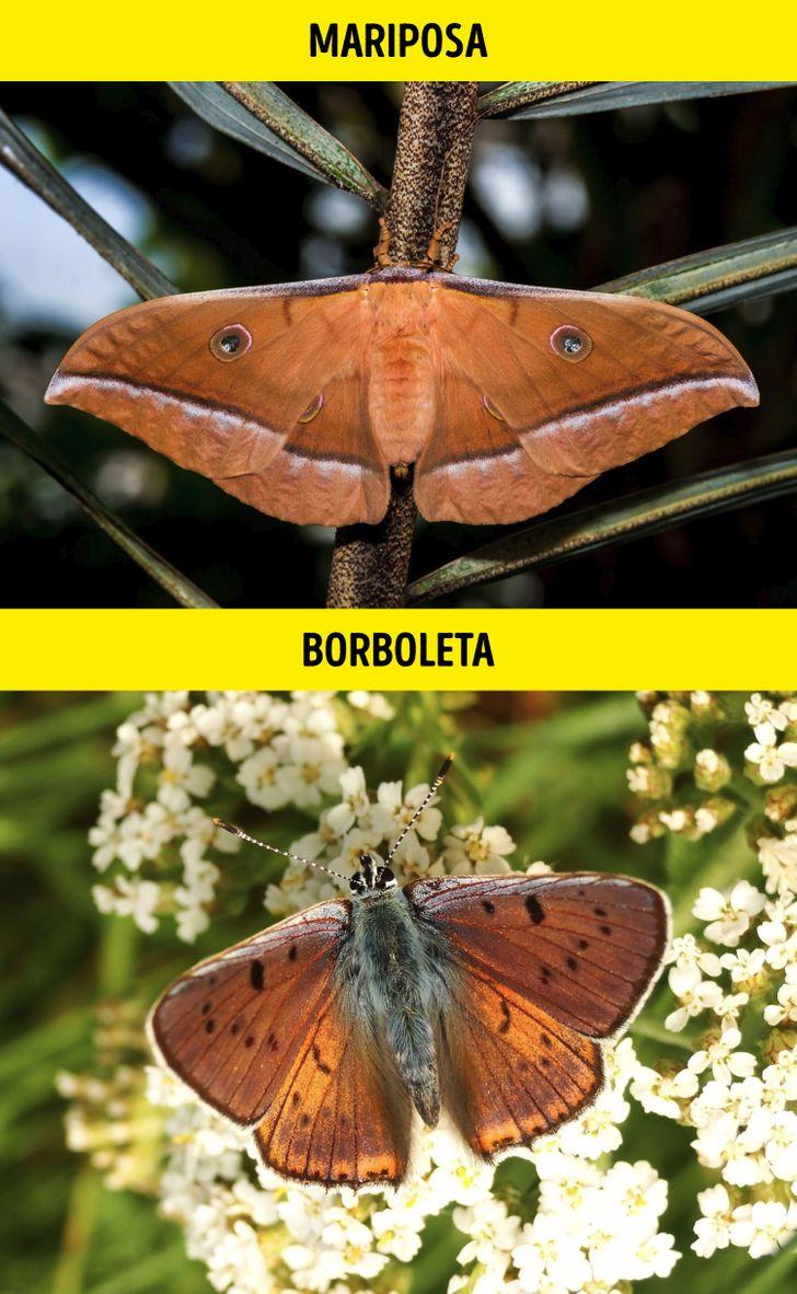 Animais identicos porem de especies diferentes 8