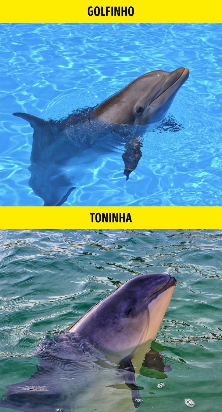 Animais identicos porem de especies diferentes 9