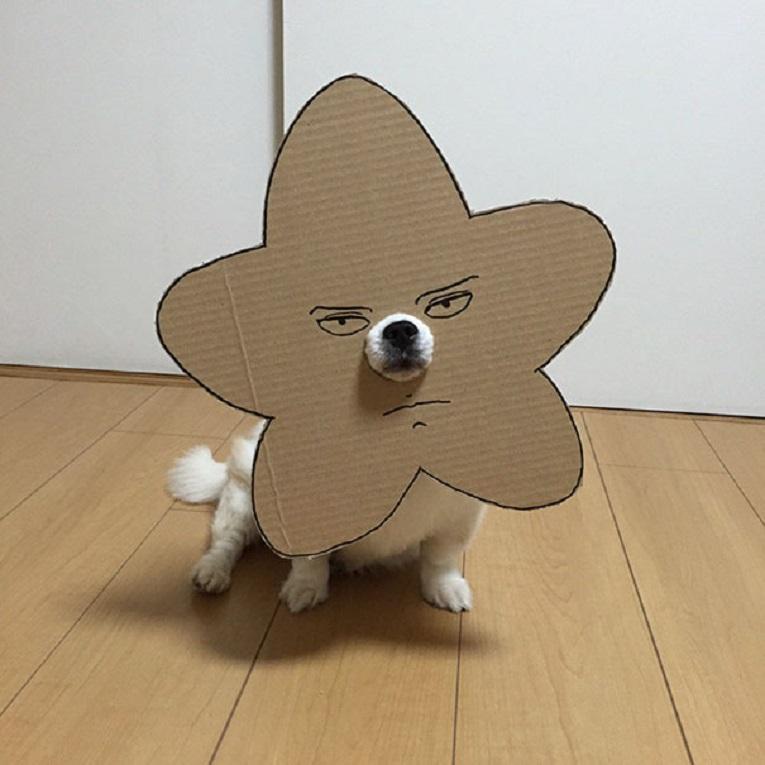 Mametaro perfil do Instagram posta fantasias de papelao de Halloween para cachorros 1