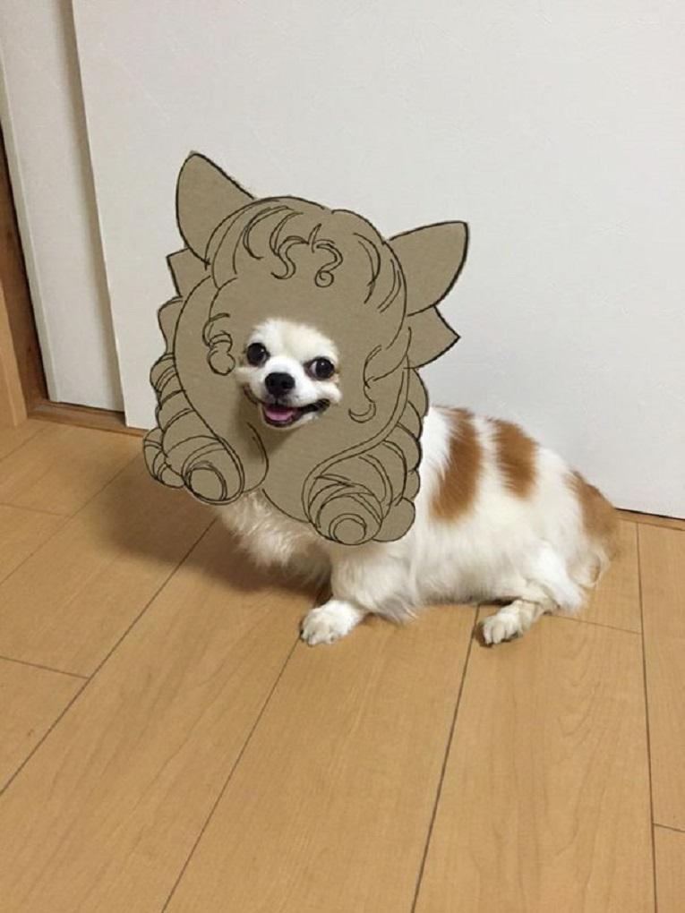 Mametaro perfil do Instagram posta fantasias de papelao de Halloween para cachorros 11