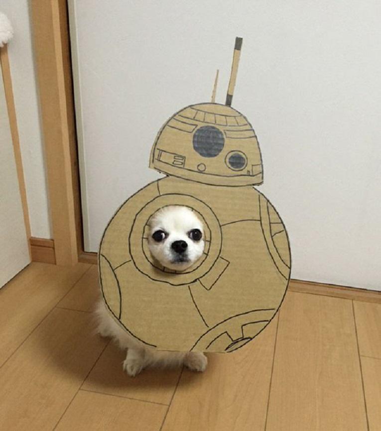 Mametaro perfil do Instagram posta fantasias de papelao de Halloween para cachorros 12