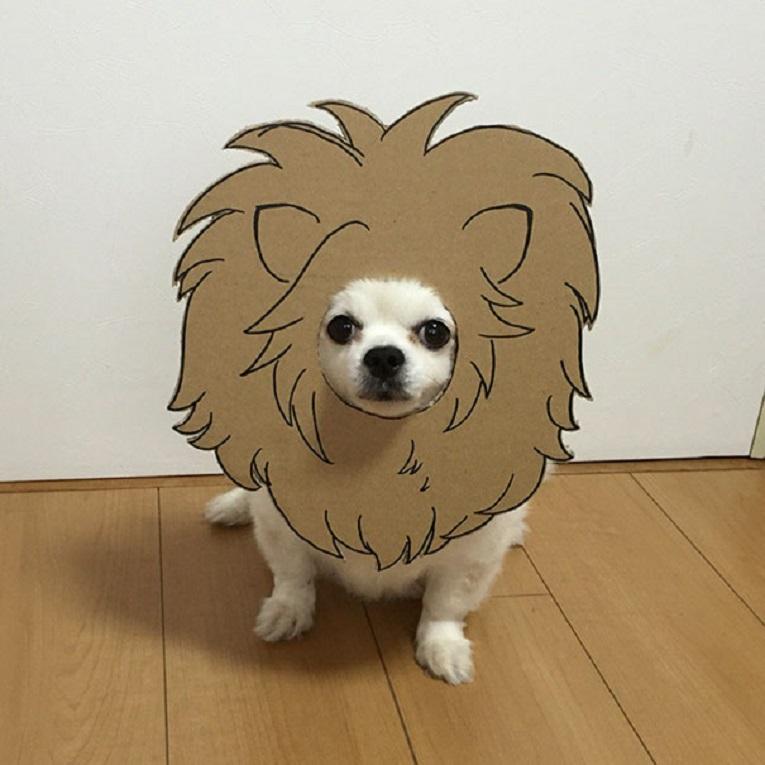 Mametaro perfil do Instagram posta fantasias de papelao de Halloween para cachorros 2