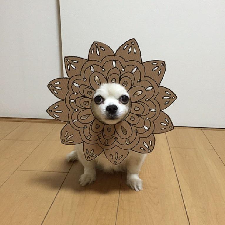 Mametaro perfil do Instagram posta fantasias de papelao de Halloween para cachorros 3