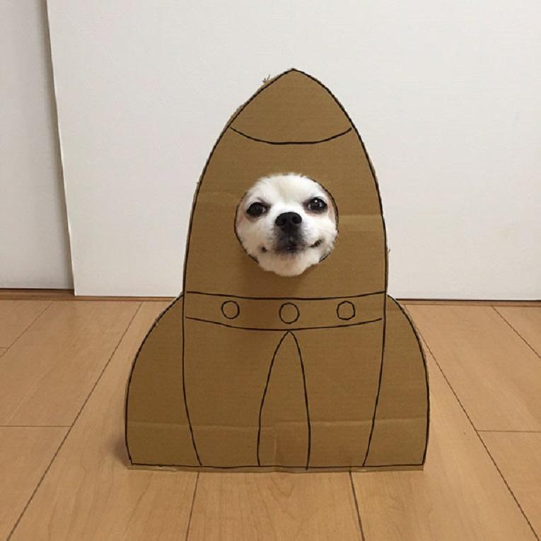 Mametaro perfil do Instagram posta fantasias de papelao de Halloween para cachorros 5