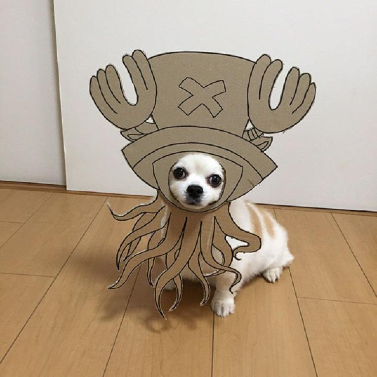 Mametaro perfil do Instagram posta fantasias de papelao de Halloween para cachorros 7