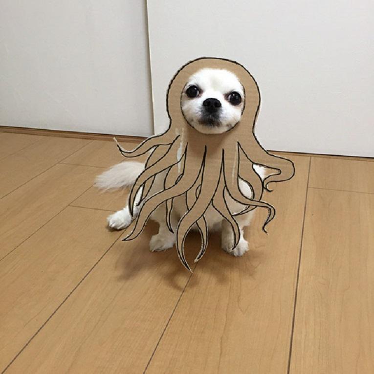 Mametaro perfil do Instagram posta fantasias de papelao de Halloween para cachorros 8
