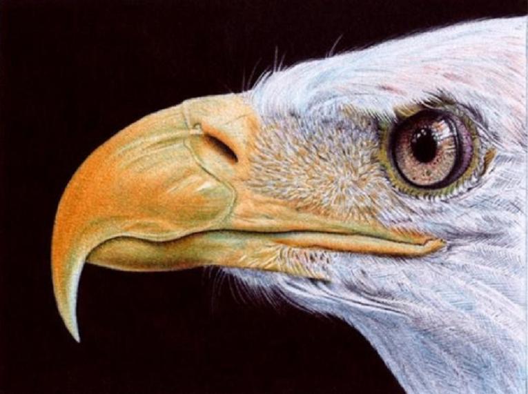 Samuel Silva artista cria retratos hiperrealistas com caneta esferografica 10